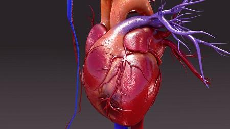9 tévhit a szív- és érrendszeri betegségekről